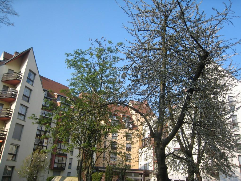 Vue cerisiers